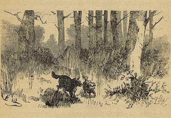 Сказка волчок. Рис. 1